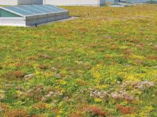 ford-green-roof-1